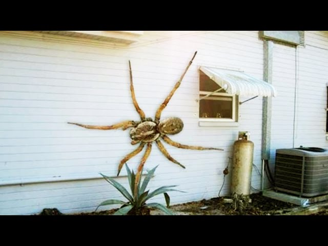 12 World's Largest Spiders