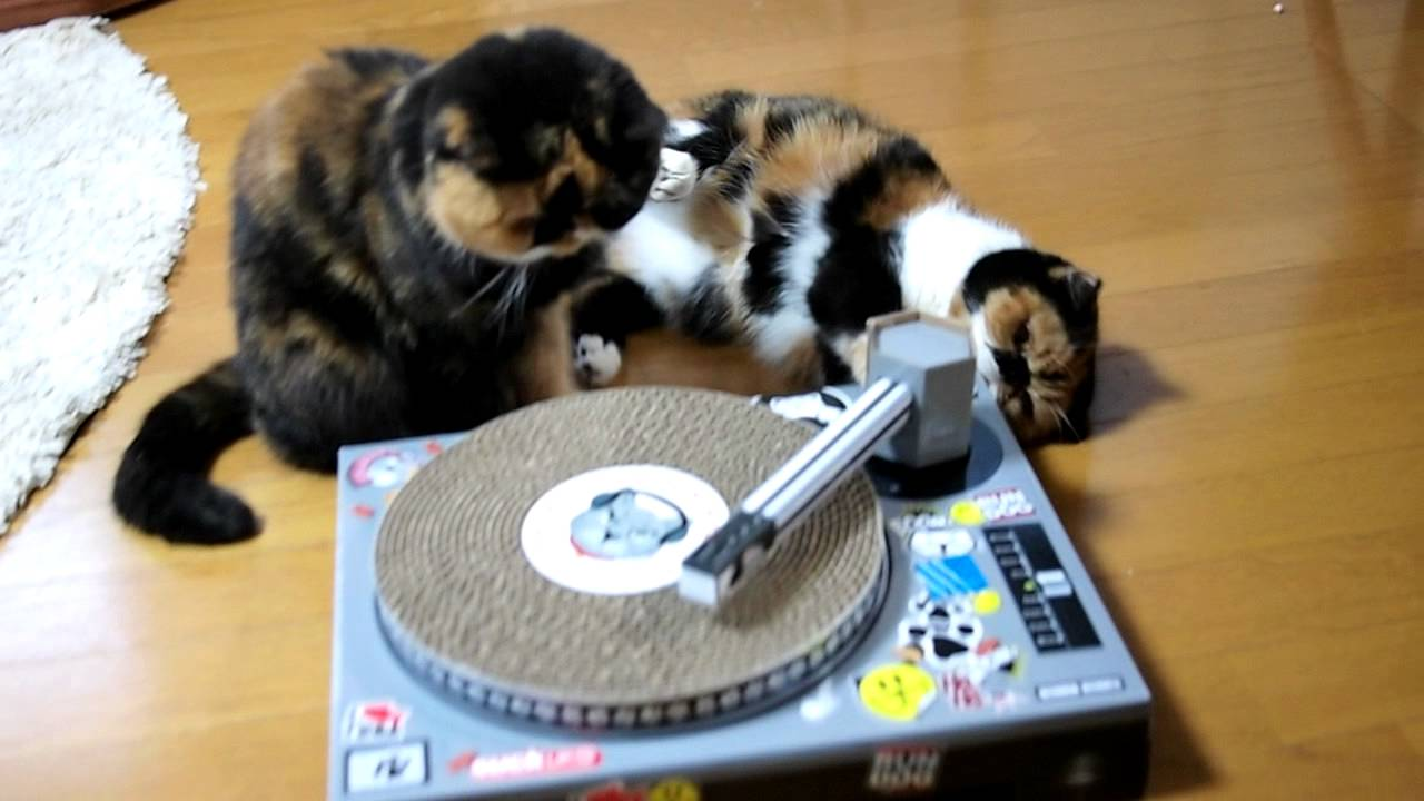 DJ Meme with Goma ♪ Cat Scratch Turntable - YouTube