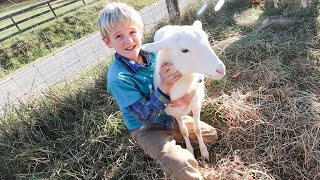 Sheep Helps Boy Grieve His Grandpa