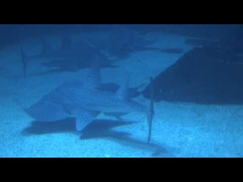 PL1_FOSSIL SHARKS AND RAYS