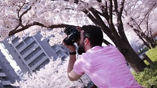 EPIC Sakura Photography | 5 Tips for AMAZING Photos