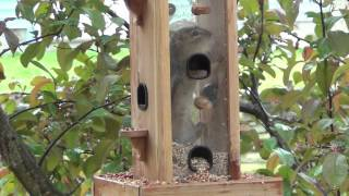 Local Wildlife : Chipmunk (In Love With Bird Food)