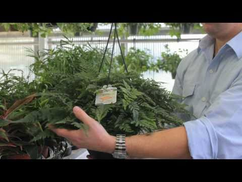 Exotic Angel Plants: How To Choose The Best Indoor Plant video