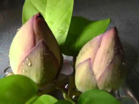 Agomoni Gaan(debi Durga Bondona) video