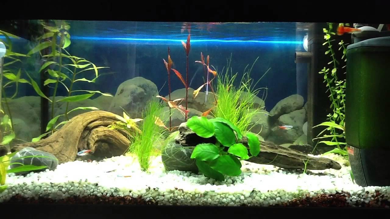 Eheim pickup filter youtube for Filtre exterieur aquarium eheim