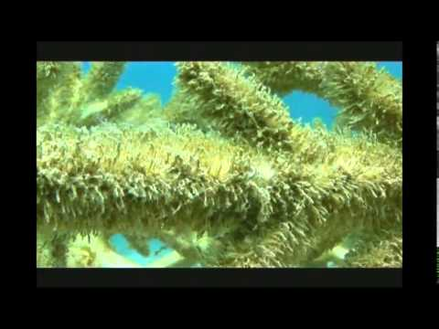Dolphin Energy Limited Artificial Reefs in Qatar by CSA Ocean Sciences Inc  - Part 1