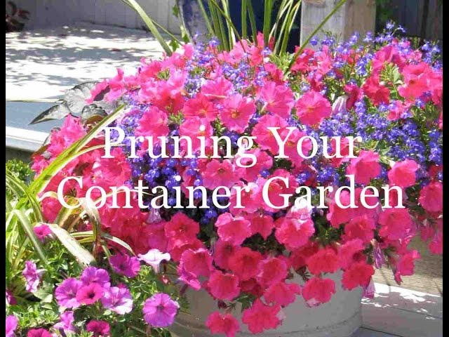 Container Gardening: Pruning Coleus to Thicken and Improve The Look of the Pot