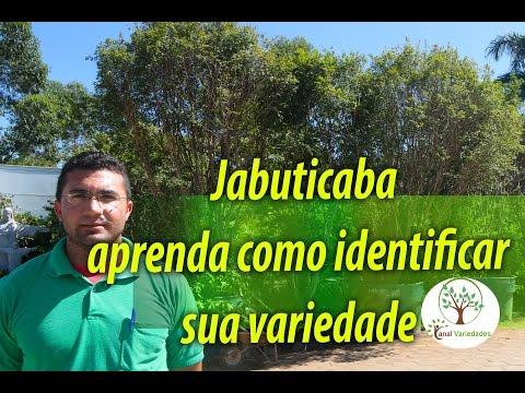 Jabuticabeira, como identificar a sua ?