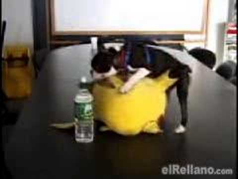 Funny Dog Have Sex With Pikachu video