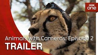 Animals with Cameras: Episode 2 | Trailer - BBC One