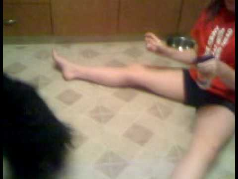 Arianna sprays her dog Video