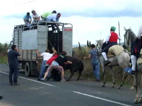 Largada de Toiros no Pombalinho 2011