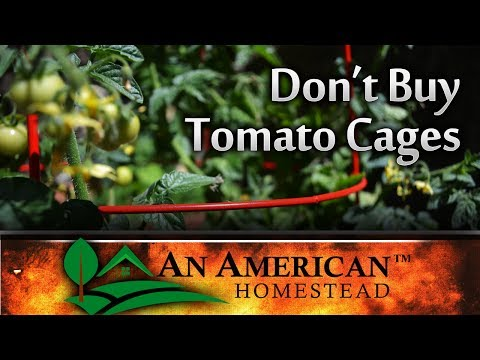 Don't Buy Expensive Tomato Cages