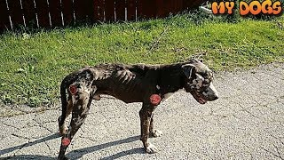Homeless Dog's Amazing Transformation After Rescue