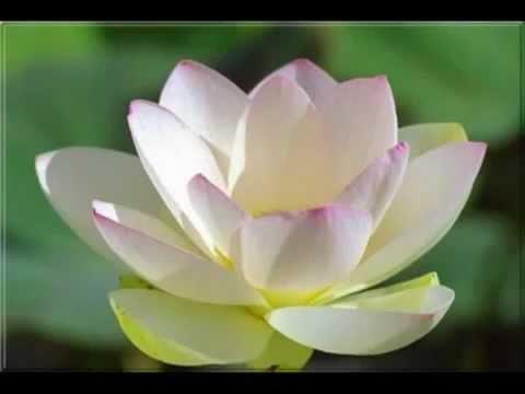 Tôn Giả A Nan (Đa Văn Đệ Nhất) - Karaoke (Nhạc Phật Giáo chế lời)