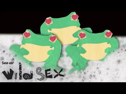 Foam Orgies: The Dangerous Sex Life of Tree Frogs thumbnail