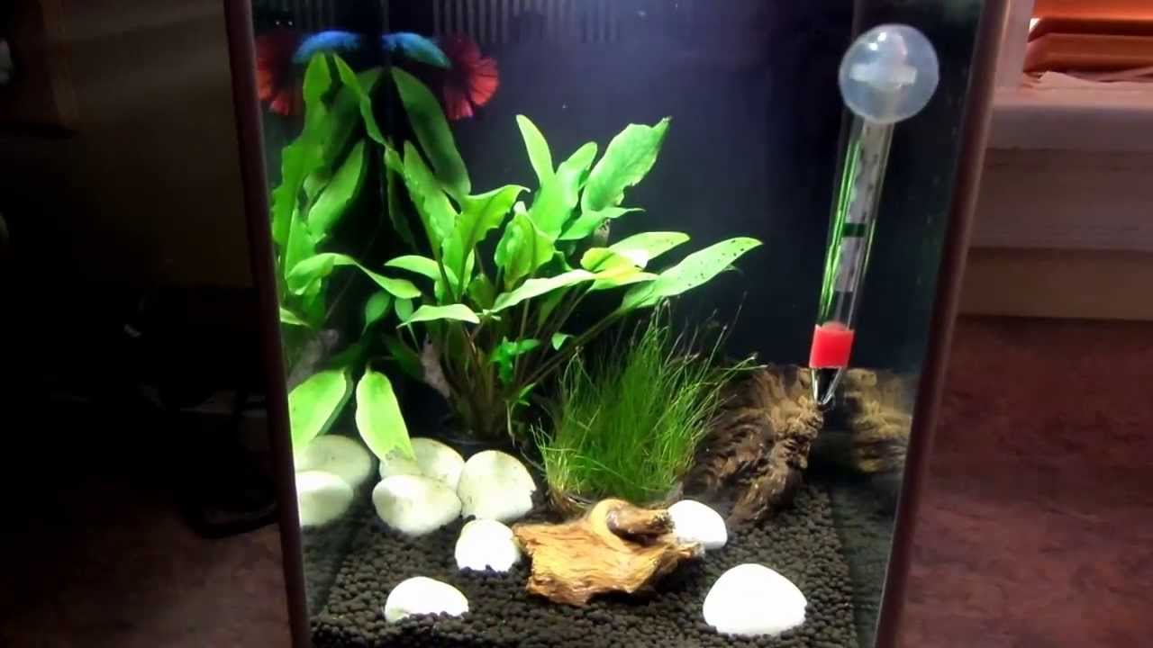 My new 2 6 u s 10 l fish tank and new betta youtube for Split fish tank