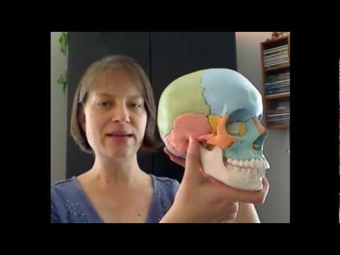 The Tour of the Cranium Part 1: Frontal and Ethmoid