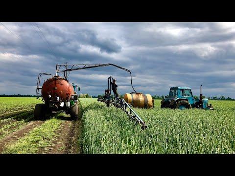 Опрыскивание пшеницы от болезней и вредителей, листовая подкормка
