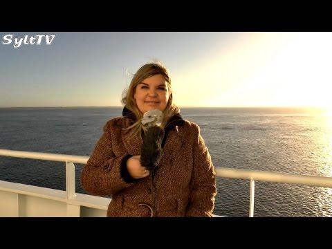 Die Sylt TV Wochensendung vom 8. Dezember 2014