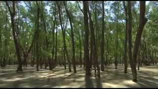 Natural Beautiful Video of The Largest Mangrove Forest in The World Sundarban, Khulna, Bangladesh