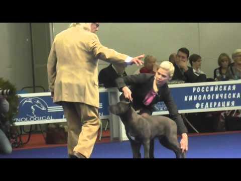 Международная выставка собак Россия 2014 Бест Бэби.