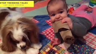 Top 10 Funny Babies Compilation 2018  Adorable Babies Playing With Dogs and Cats