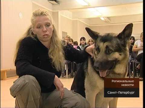 МО Пискаревка. Первые уроки дрессировки собак.