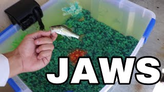 HOME MADE Bait TANK FOR JAWS!!