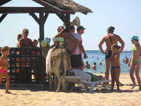 Ослик-зеброид на пляже1