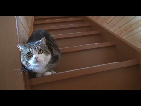 階段とねこ。-Stairs and Maru&Hana.-