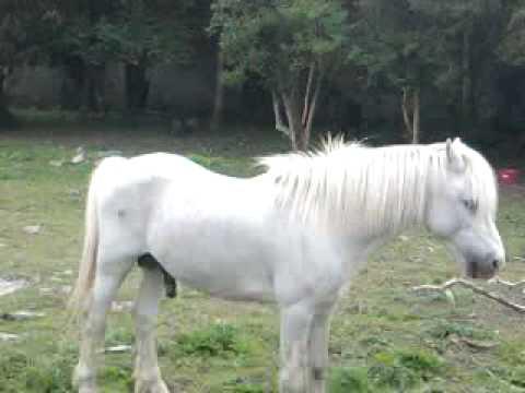 Prince - Horny Pony