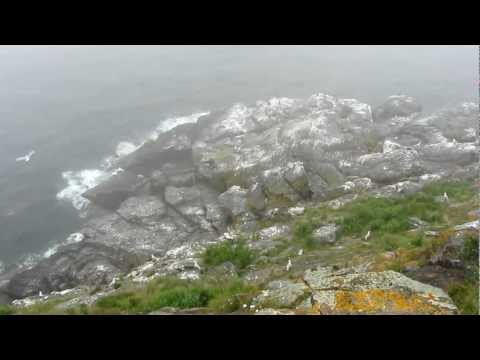 Seagull Soaring on the Backside of Monhegan Island Maine