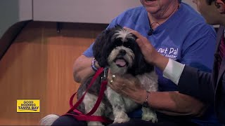 Pet of the week: Max is a gentle 7-year-old Shih Tzu wanting a lap to sit on