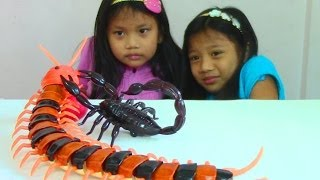 Innovation Scorpion and Giant Scolopendra Creepy Crawlers Toys