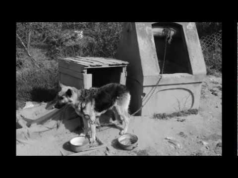 Kreck - Tetovált Állatmentők