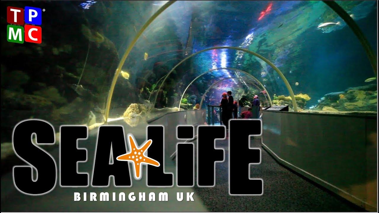 Visit National Sea Life - Birmingham - Virtual tour HD! - YouTube