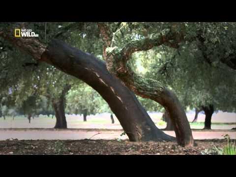 Дикая природа Средиземноморья
