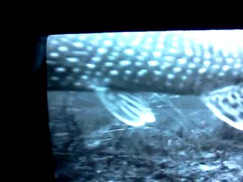 Ice fishing pike cabelas underwater camera montana youtube for Cabela s kalispell