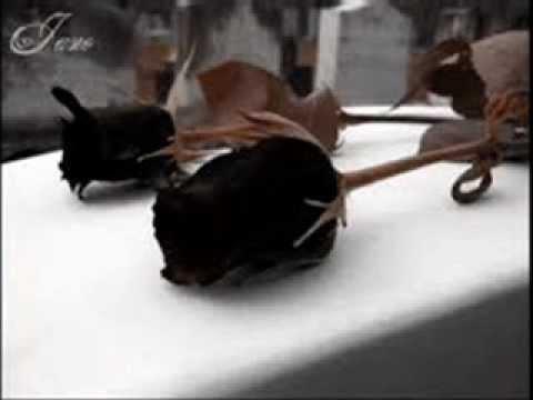 DESICIONES   Mc Jetro (VideO offiCial)