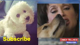Dog Functional Training Tips