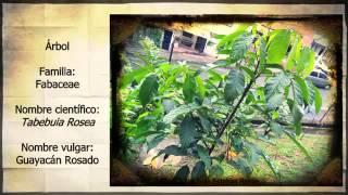 Clasificación de plantas: Árboles y arbustos del Sendero Ecológico