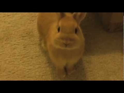 Bunnies Play Tag