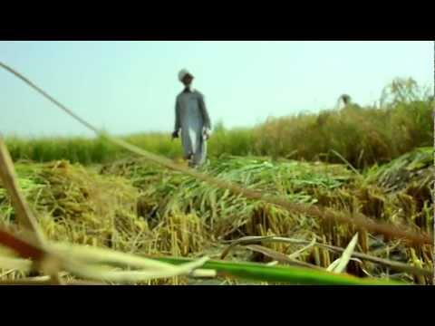 Ideal Rice Industries (PVT) Ltd - Introductory Video