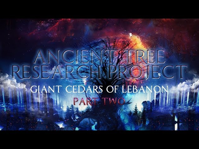 Ancient Tree Research Project  Giant Cedars of Lebanon Part 2 впёпё