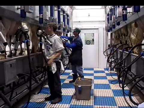 Milking parlour Champion