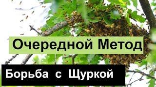 пчеловодство для начинающих -№93 Очередной Метод Борьбы с Щуркой. Обмен Опытом.