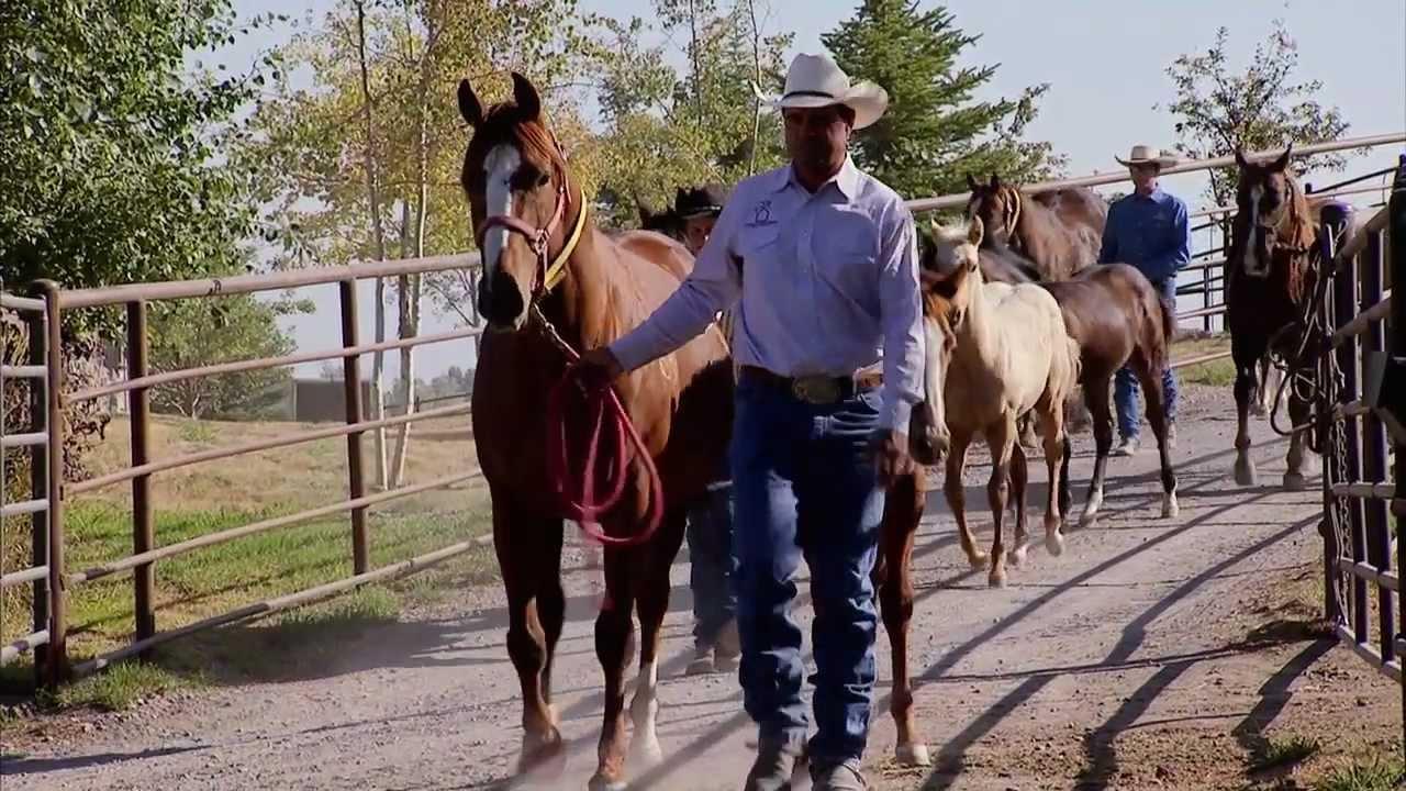 Montana Horse Ranch - America's Heartland - YouTube