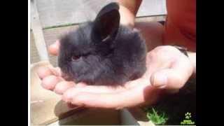coelinho da pascoa (coelhos fofos)