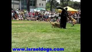 Israeldogs- 3 dogs attack on 1 decoy